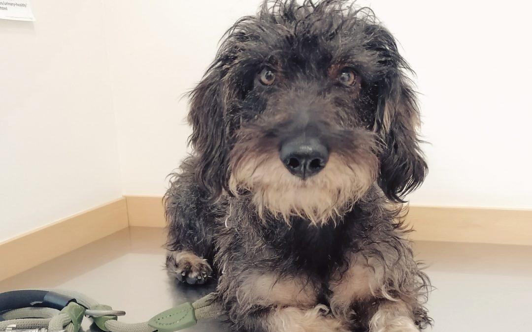 Miedos y dudas sobre la esterilización de tu mascota